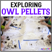 Fun with Owl Pellets