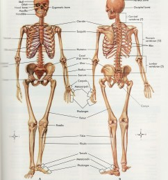 human skeleton diagram [ 2262 x 3236 Pixel ]
