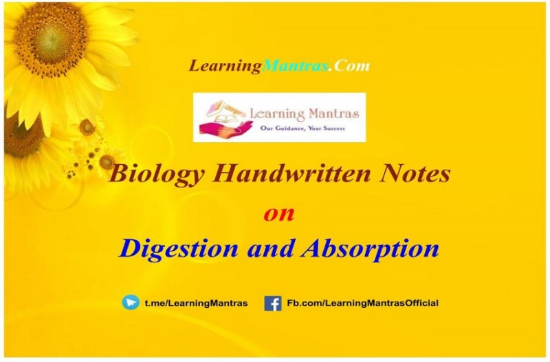Digestion and Absorption Handwritten Notes PDF