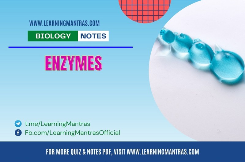 MCQ on Enzyme