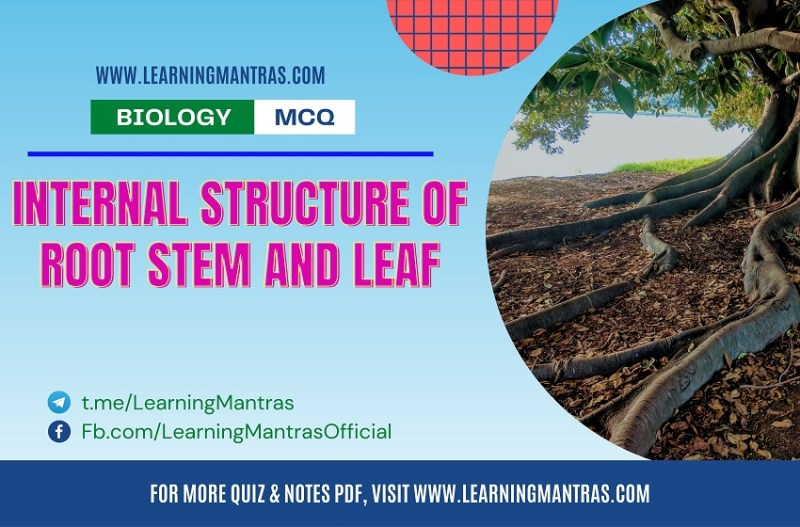 MCQ on Internal Structure of Root Stem and Leaf