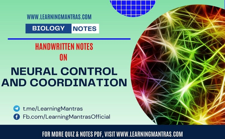 Neural Control and Coordination Handwritten Notes PDF for Class 12, NEET, AIIMS and Medical Exams