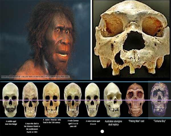 Sejarah Pithecanthropus Mojokertensis Dan Ciri Cirinya Lengkap