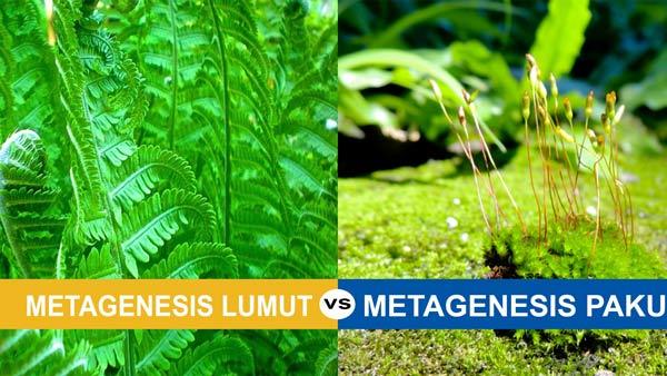 ✔ Belajar Perbedaan Metagenesis Paku dan Lumut