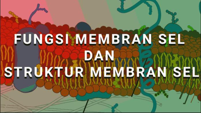 fungsi membran sel
