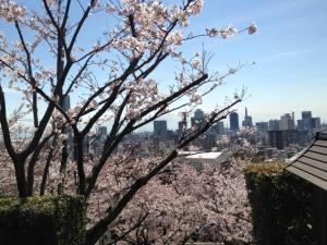 Sakura 2016 Kobe 3