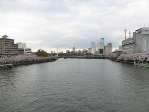 Sakura 2016 Osaka -Cherry blossom 7