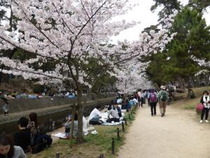 Sakura 2016 in Nishinomiya 4