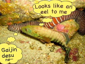 I-am-not-an-eel