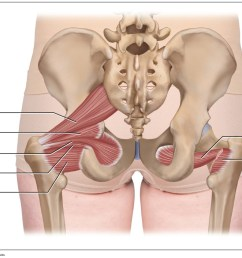 posterior views of the deep lateral rotator group including the piriformis  [ 1449 x 856 Pixel ]