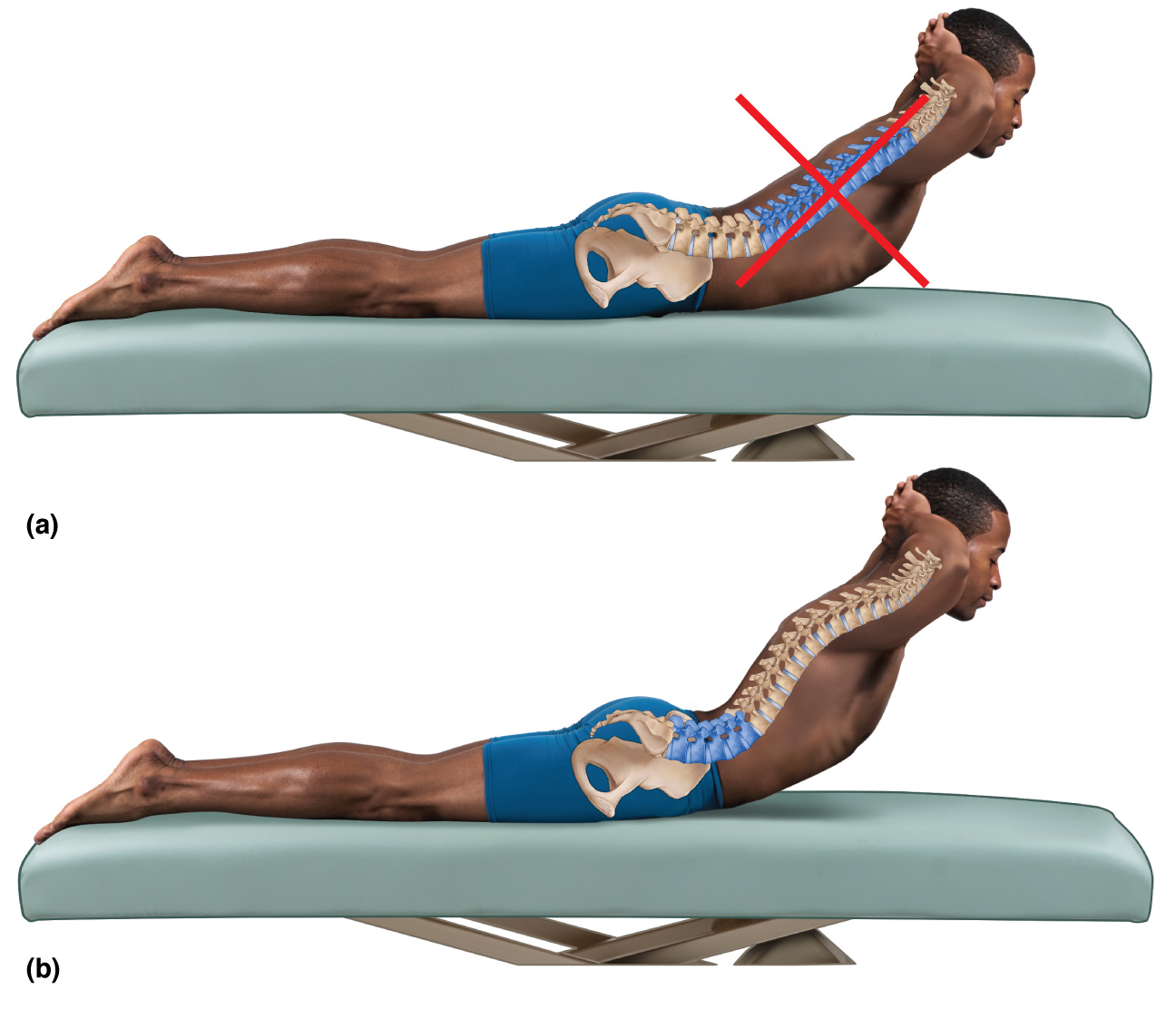 Lateral flexion Archives - Learn Muscles