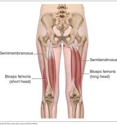 five muscles of sacroiliac stabilization part 3 hamstrings [ 1017 x 1002 Pixel ]