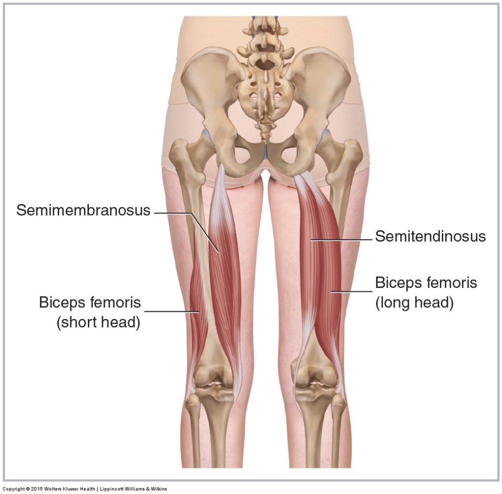 medium resolution of five muscles of sacroiliac stabilization part 3 hamstrings