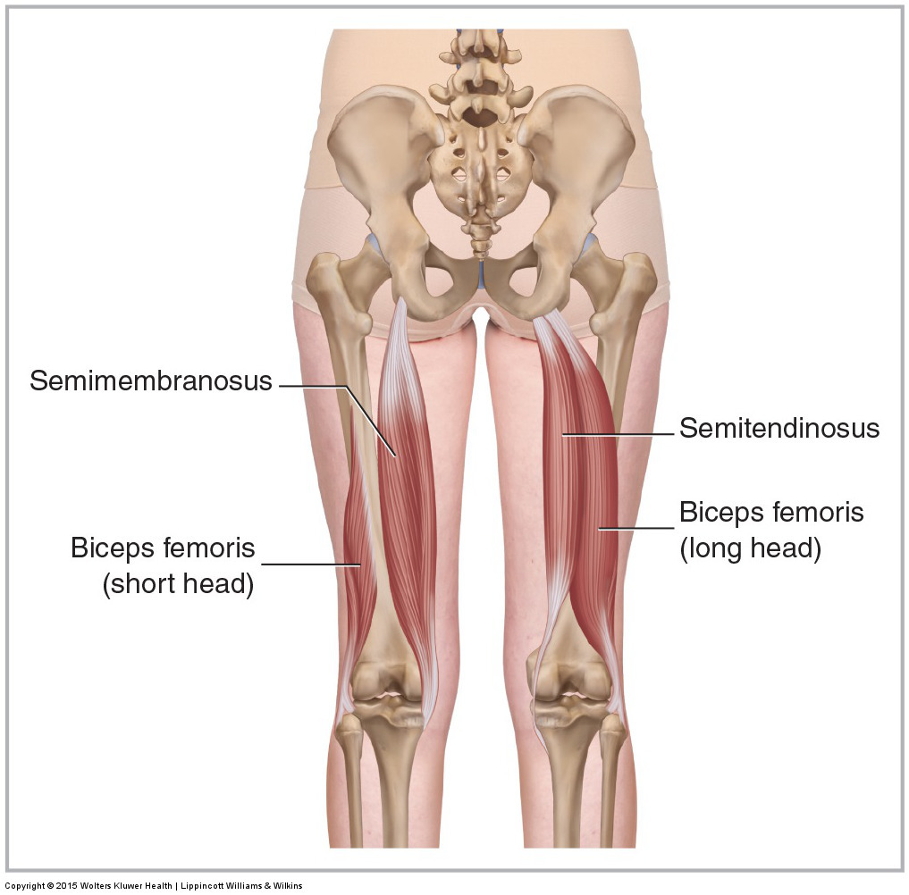 hight resolution of five muscles of sacroiliac stabilization part 3 hamstrings