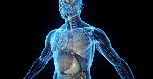 human-body-transparent