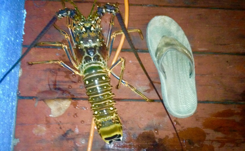 Lobster – Palooza……or this guy caught a huge lobster and then THIS happened…