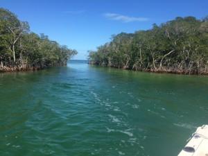 Through the mangroves !!