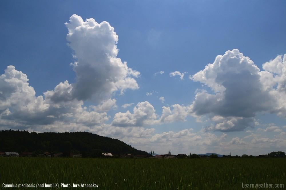 Cumulus mediocris LW 1