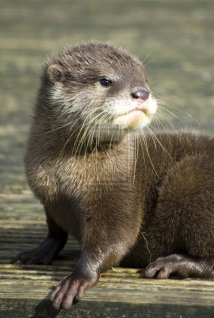 Baby River Otter Ideas Items
