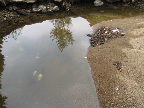 Arnas : pesticides déposés dans le Nizerand (1/3)