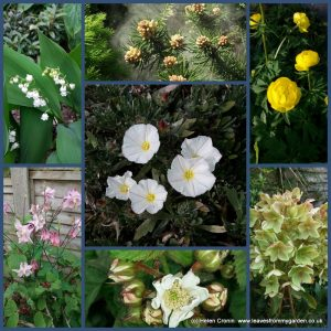 Garden Photo Challenge Week5