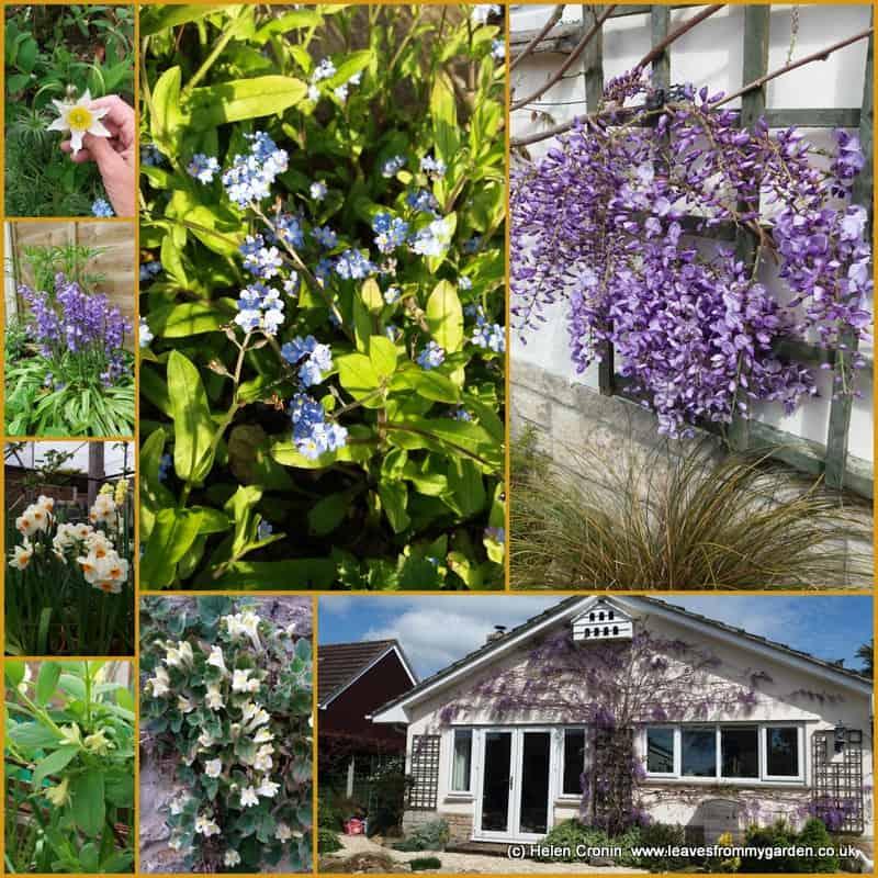 Garden Photo Challenge Weeks 1-10