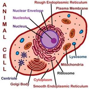 Cell Structure