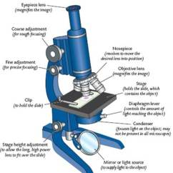 A Diagram Of Microscope Parts Directv Genie Hr34 Wiring Cell Structure