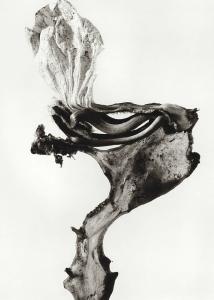 joan fontcuberta - herbarium - le bastart