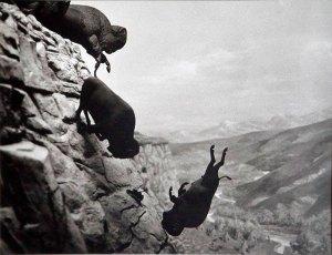 David wojnarowicz - buffalo - le bastart