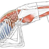 """Yogabuch """"Yoga Anatomie"""""""