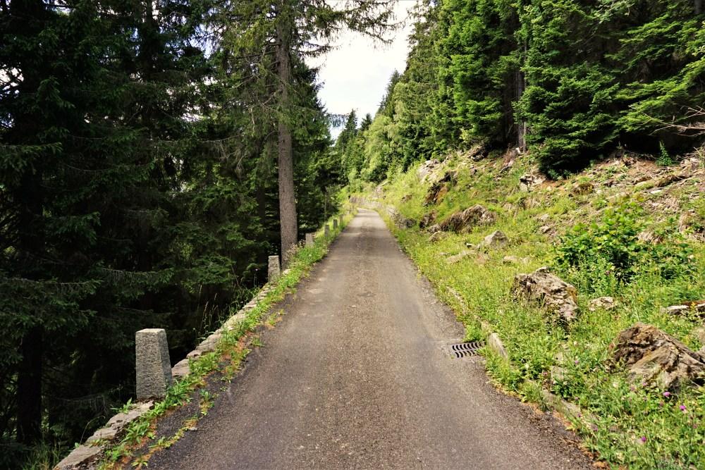Eine sehr schmale Strasse durch den Wald