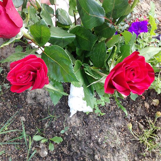 12 von 12 - August 2014 - rote Rosen für den verstorbenen Bruder