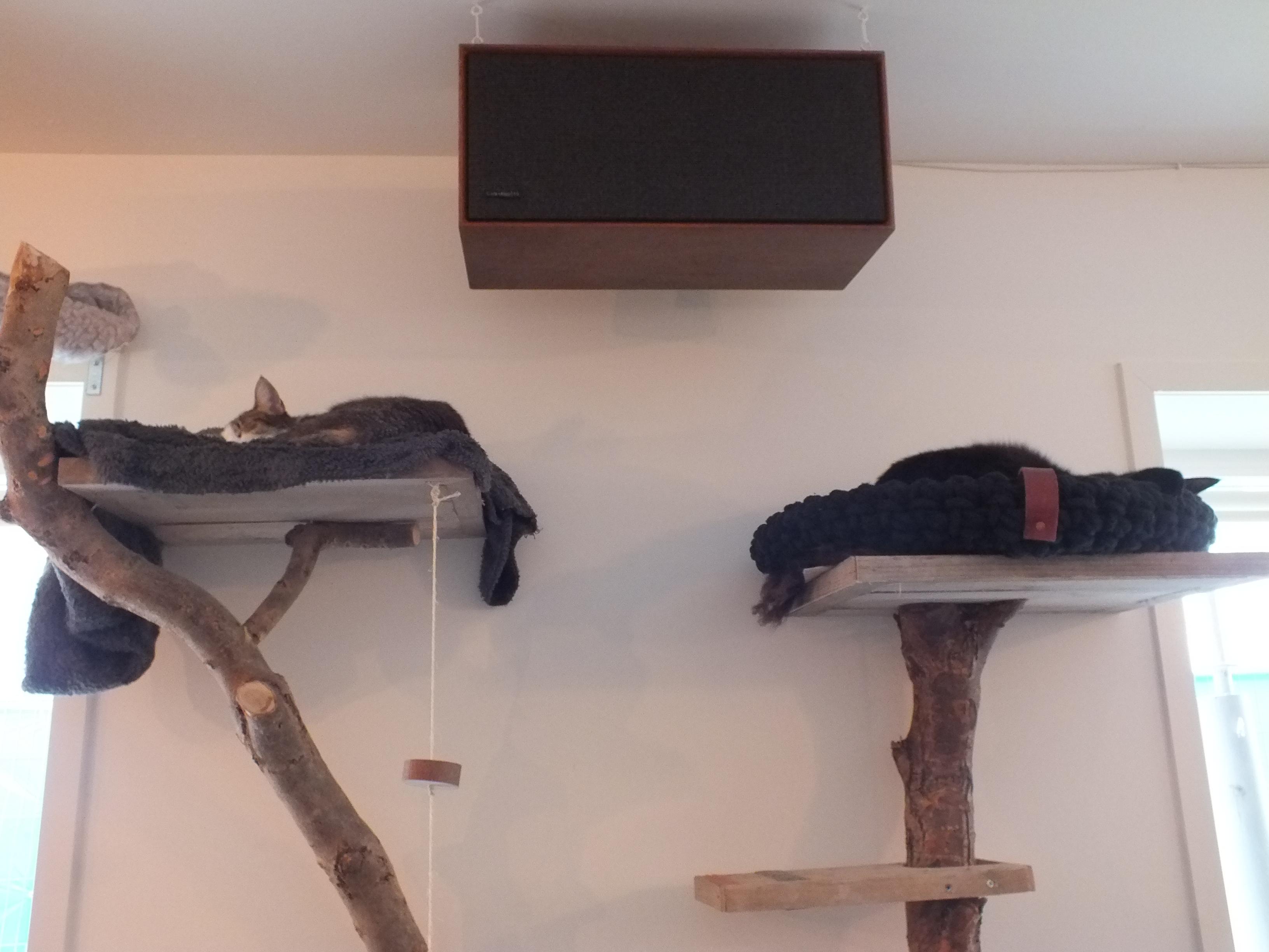 Kratztonne Selber Bauen Katzenkratzbaum Selber Bauen Anleitung