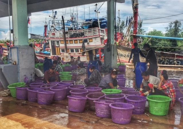 Fischsortierung Pak Naam, Chumphon, Thailand