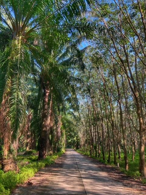 Straße durch Palmöl und Kautschuk Plantagen am Meer Chumphon