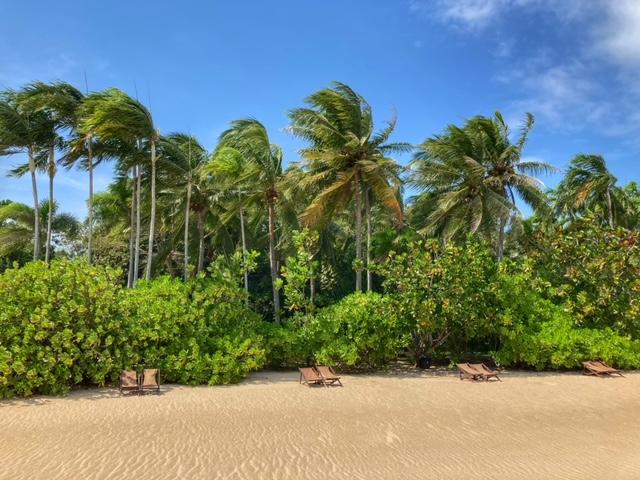 Strand Palmen und Wind, Baan Krut Thailand im November