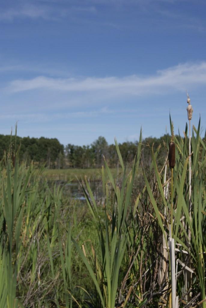 Wetlands, Fotos: ©Denise Ott