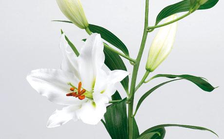Attraktiver Blickfang Schnittblumen  Lebensmittel Praxis