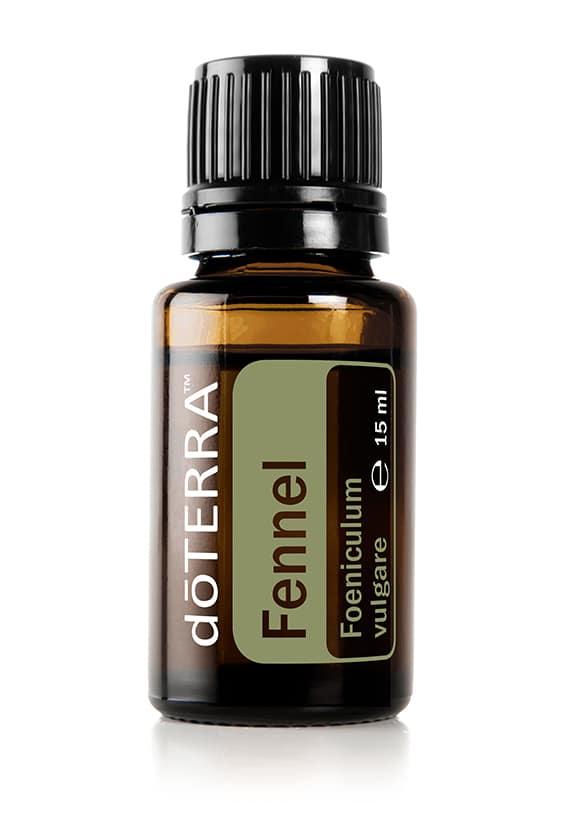 Fenchel – Foeniculum vulgare – Fennel