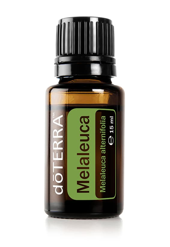 Melaleuca – Teebaumöl – Tea Tree