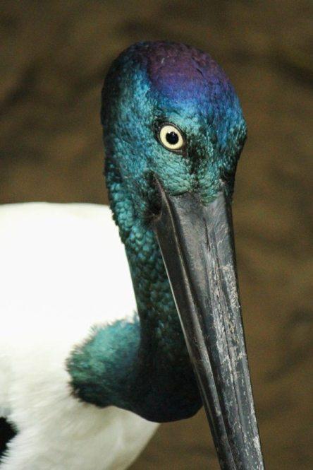 [:fr]Les oiseaux du queensland[:en]Birds of queensland[:]