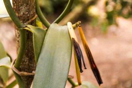 Vanille - Eco & Culture Tour Zanzibar