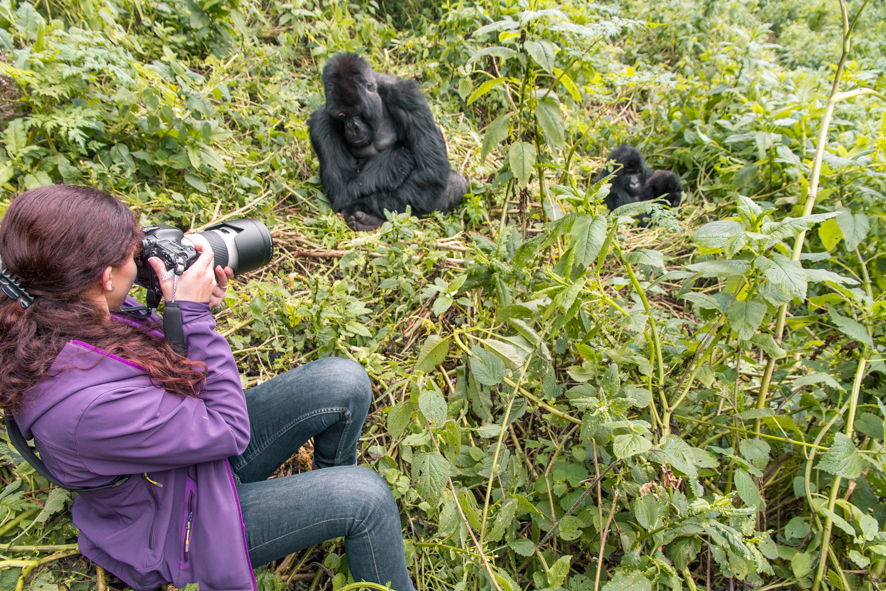 Taking photos of gorillas with a zoom