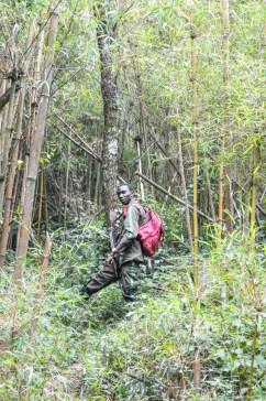 Gorilla tracker with a gun in Rwanda