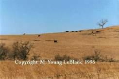 Gobblers Knob near Grouse Creek Ranch in Kansas