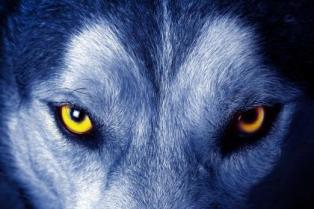 a-the_soul_of_the_wolf-1578368
