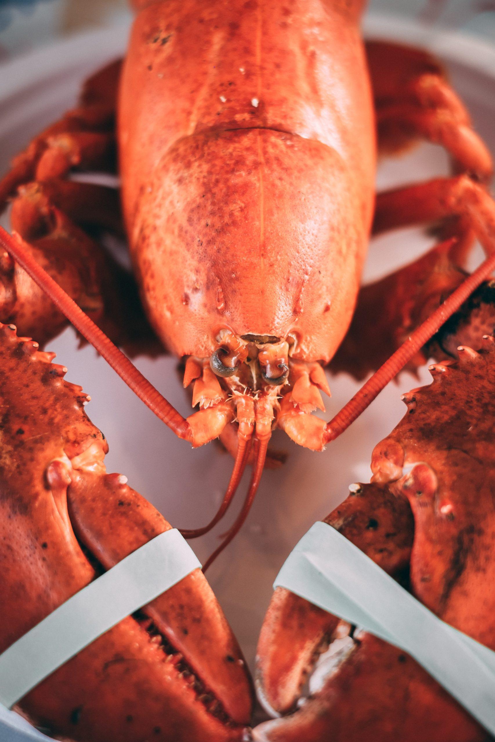 homard et ses pinces: pas facile à décortiquer!