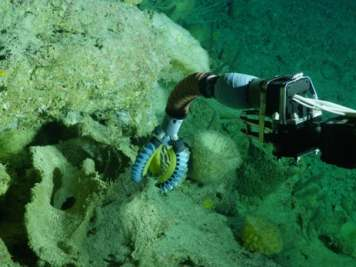Wyss Institute dévoile un bras robotique mou pour les sous-marins