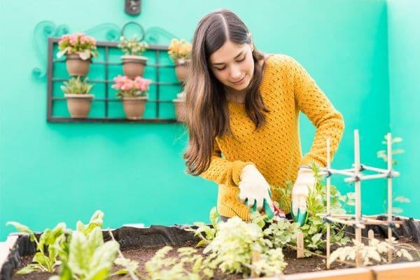 Les secrets pour entretenir votre jardin